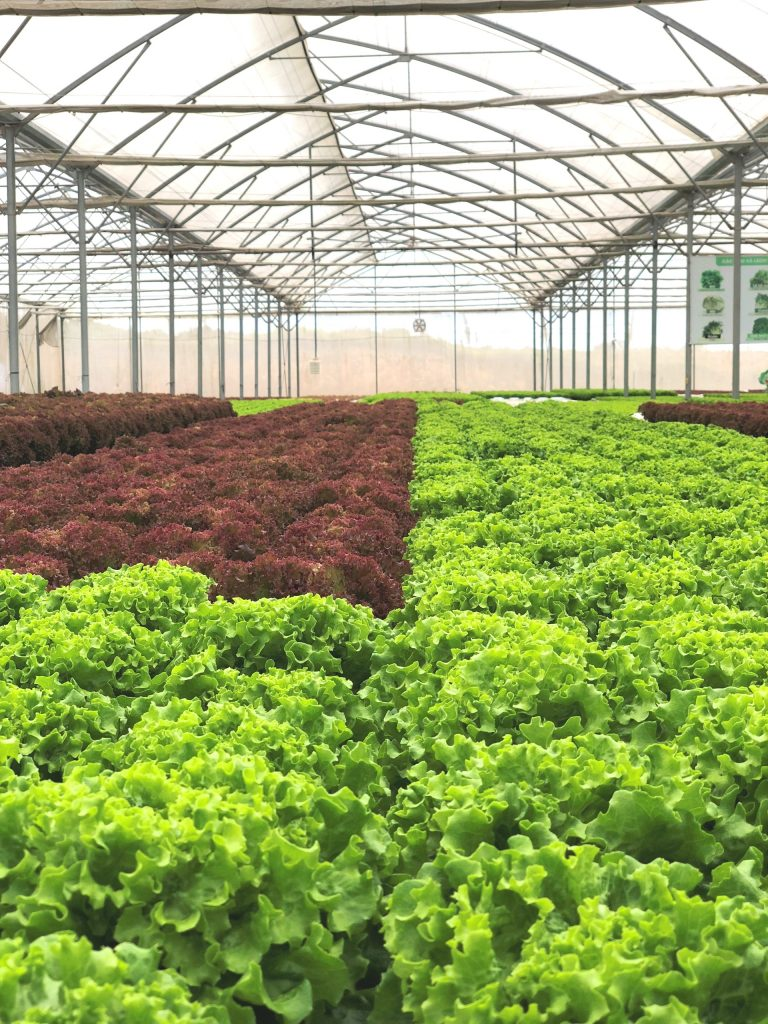 Grow Safer Leafy Vegetables In Net Houses