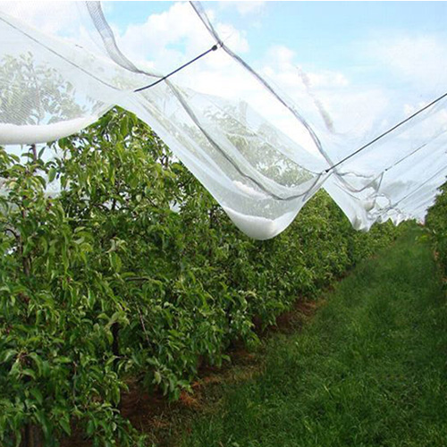 Anti Hail Netting Protect From Damaging Hailstorms Agronew