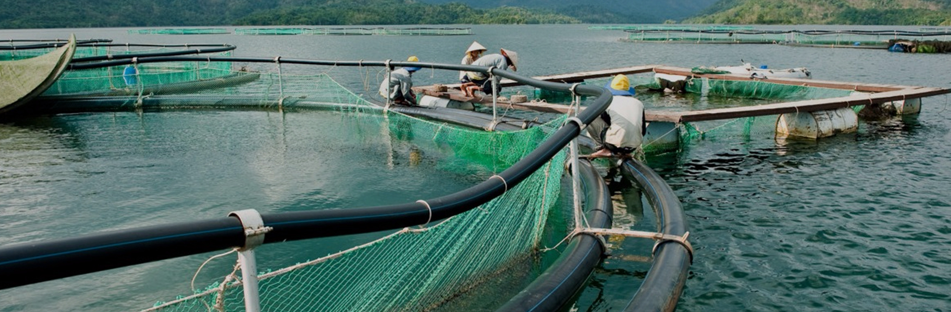 Aqua Netting, Fish cage Netting, Fishery Nets, Aqua Nets